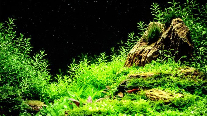 Scarlet Badis Care Guide Tank Mates, Feeding and Breeding Banner