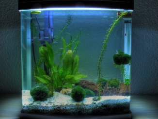 Best 5 Gallon Fish Tanks Buyer's Guide, Stocking Suggestions and More... Banner
