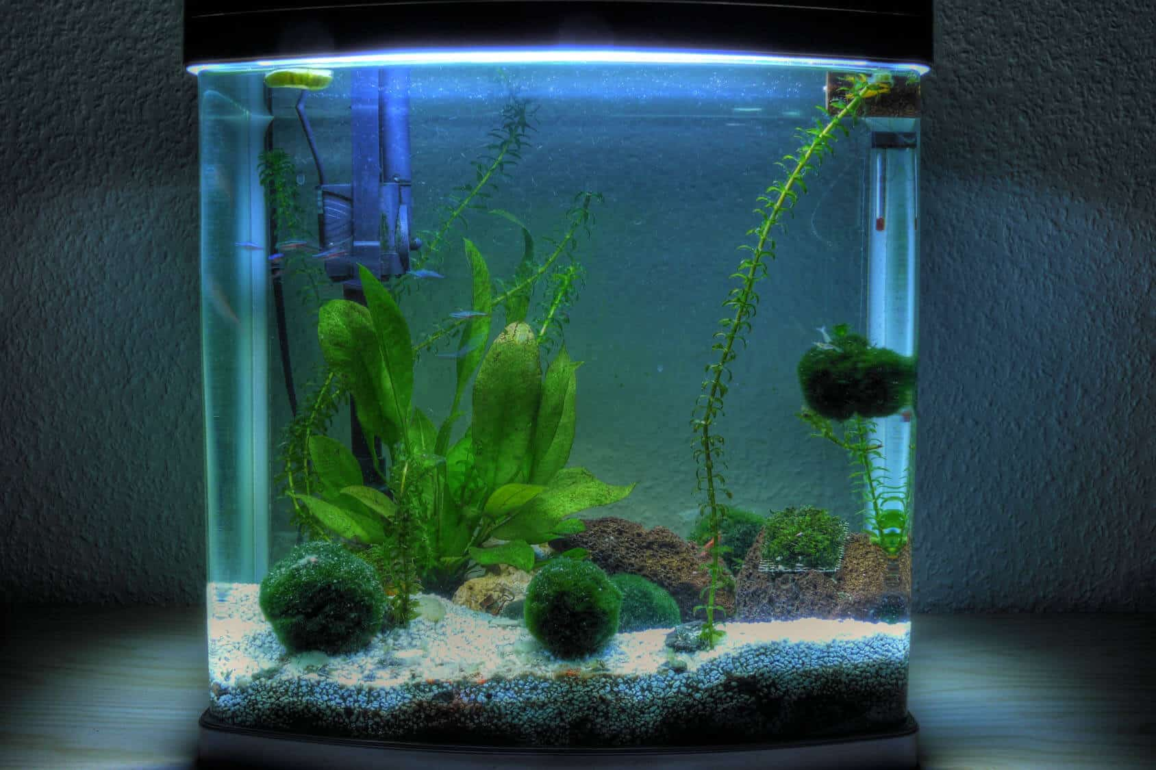 Best 5 Gallon Fish Tank Buyer S Guide Stocking Suggestions And More Fishkeeping World