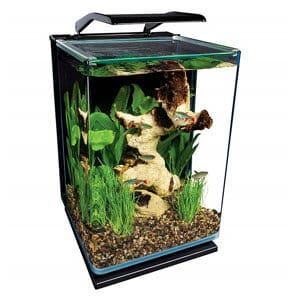 Most Affordable 5 Gallon Aquarium