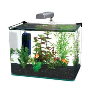 Quality and Unique 10 Gallon Aquarium Kit