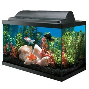 Tank and Hood Combo Aquarium