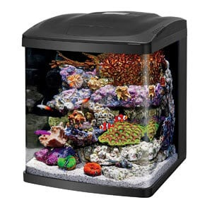 Best Premium 15 Gallon Tank