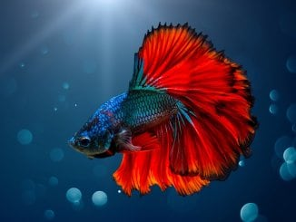 160 Best Betta Fish Names For Your Fiery Friend Banner