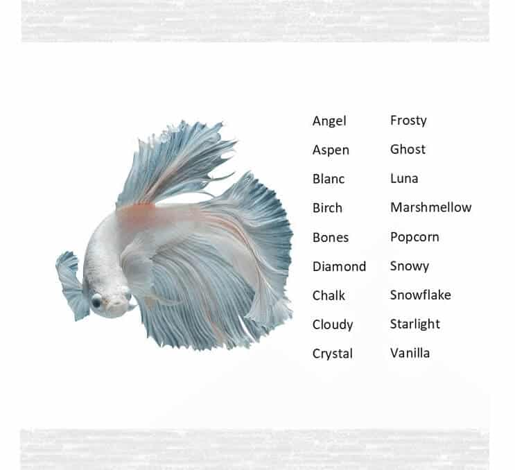 160 Best Betta Fish Names For Your Fiery Friend