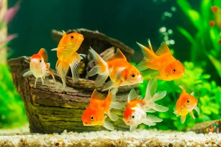 500+ Funny Fish Names: From Tank You to Solemate