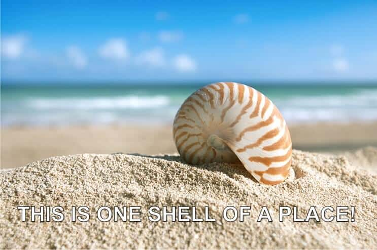 One Shell of a Place