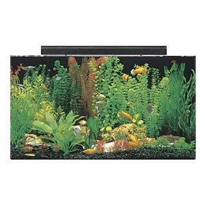 Most Affordable 50 Gallon Tank