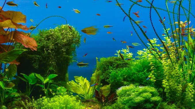 The Best 50 Gallon Fish Tanks The Definitive Guide Cover