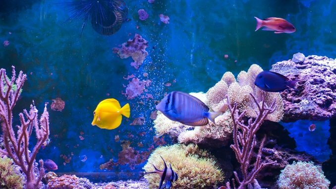 17 Most Popular Saltwater Fish
