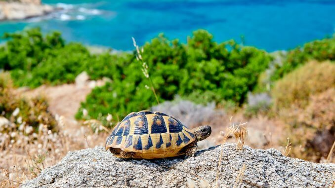Eastern Box Turtle Complete Care Guide Diet, Habitat And More... Cover