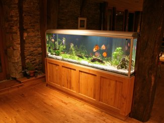 55 Gallon Fish Tank Guide (Best Fish, Setup Ideas, Equipment and More) Banner