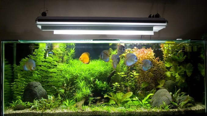 Aquarium UV Sterilizer The Ultimate Guide To Picking The Right One Banner
