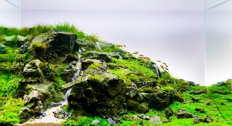 Aquascaping Your Aquarium: Complete Guide To Planted ...