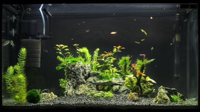 Best Aquarium Filter The Complete Guide To Choosing The Right One Banner