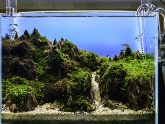 Best LED Aquarium Lighting The Ultimate Guide To Picking The Right One Cover