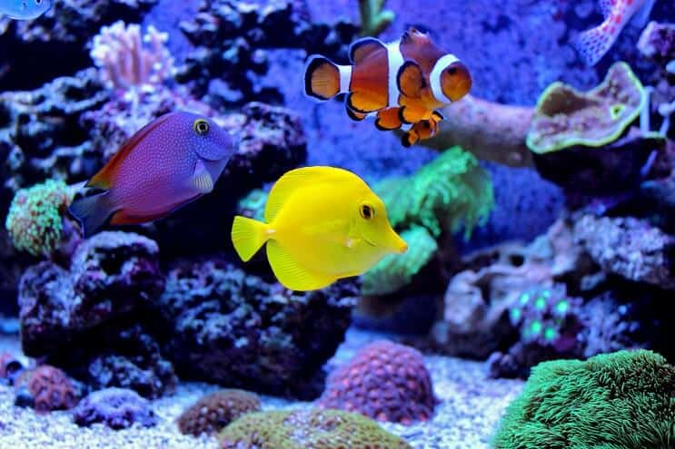 the definitive clownfish care guide is nemo the fish for you fishkeeping world
