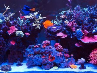 Saltwater Aquarium Complete Set Up Guide in 8 Steps Banner