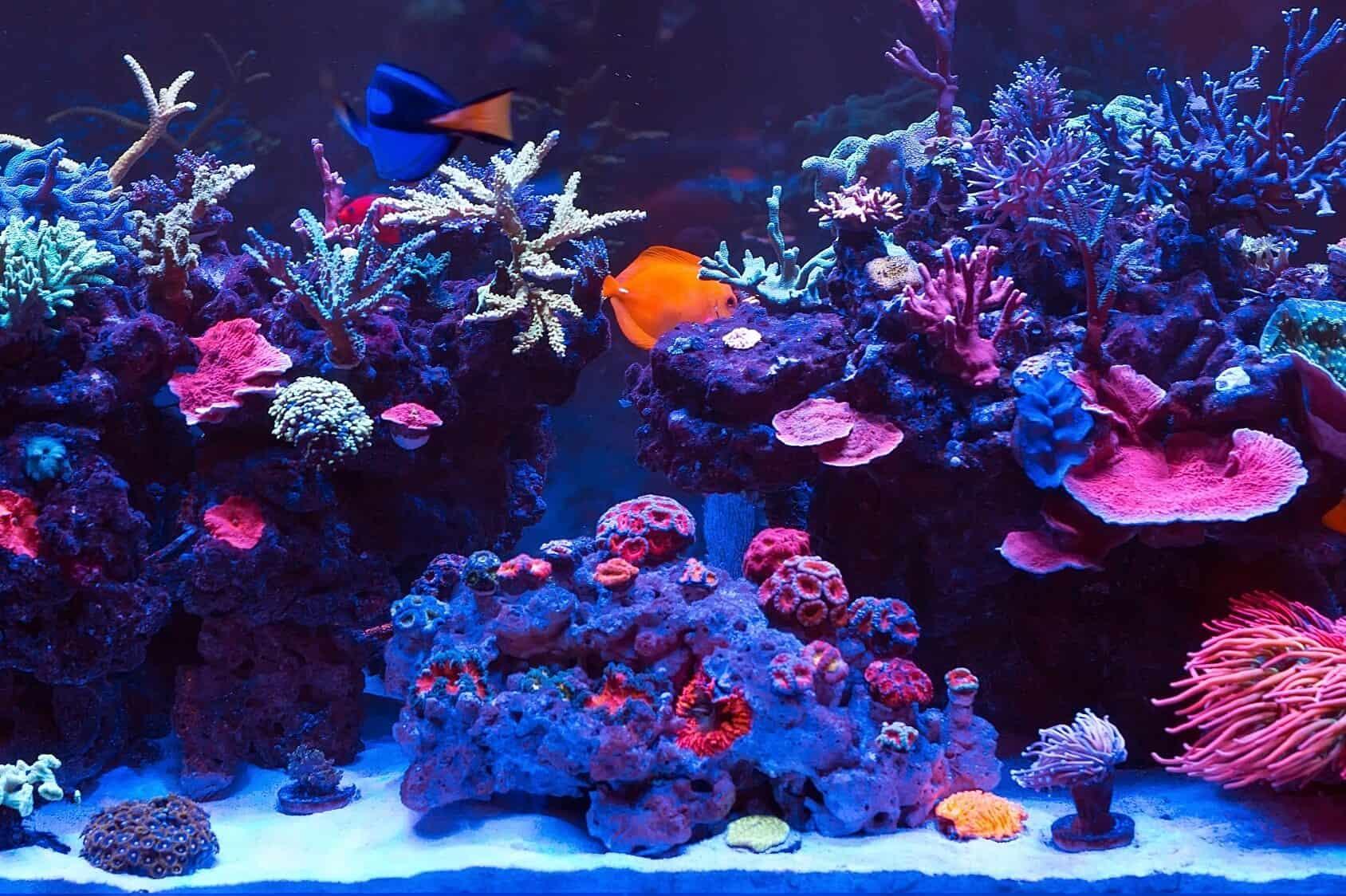 R Aquarium Complete Set Up