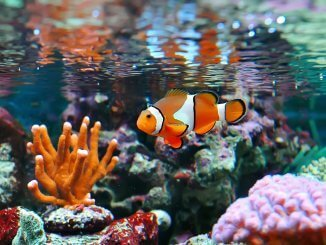 The Definitive Clownfish Care Guide Is Nemo The Fish For You Cover