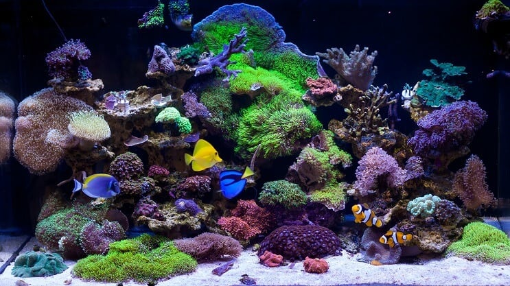 Types of Saltwater Tanks
