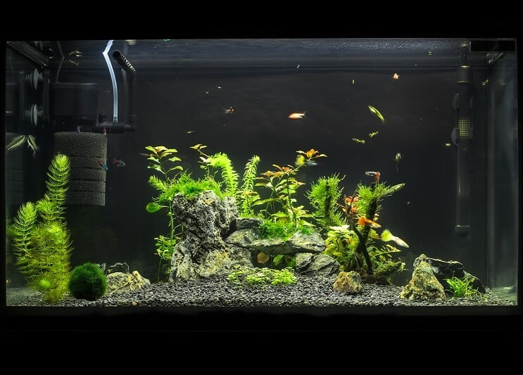 20 Gallon Long Aquarium