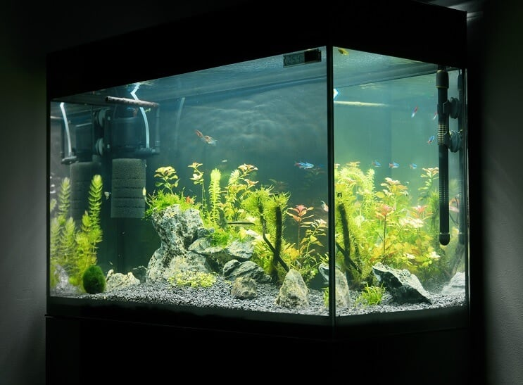 20 Gallon Long Equipment