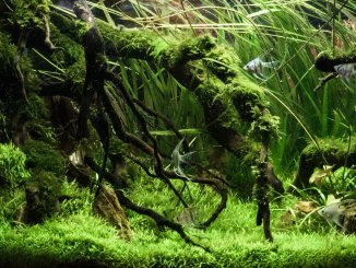 30+ Best Low Light Aquarium Plants Easy Care, Carpet, and More…