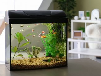 40 Gallon Breeder Tank (Best Tanks, Stocking Ideas and More) Banner