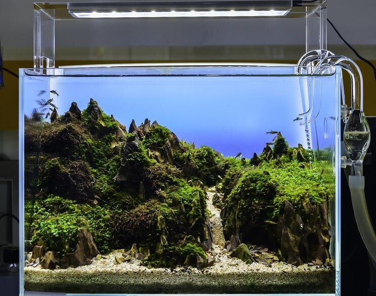 Aquascaped Aquarium