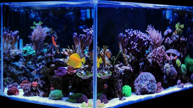 Best 20 Gallon Long Aquariums (Stocking Ideas, Equipment and More) Banner