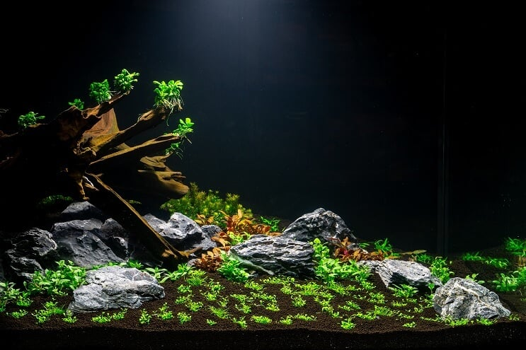 Planting the Aquarium