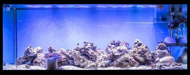 100 Gallon Fish Tank Setup