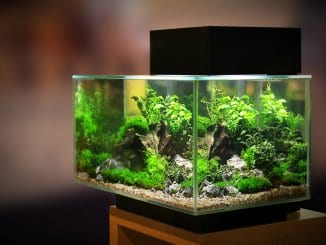 30 Gallon Fish Tank Setups, Stocking Ideas, Equipment And More… Banner