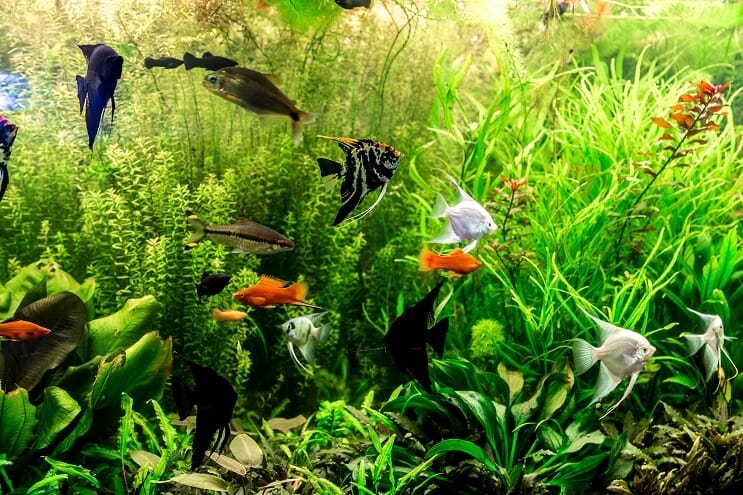 30 Gallon Fish Tank Stocking Suggestions