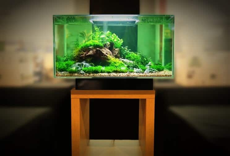 30 Gallon Tank Equipment