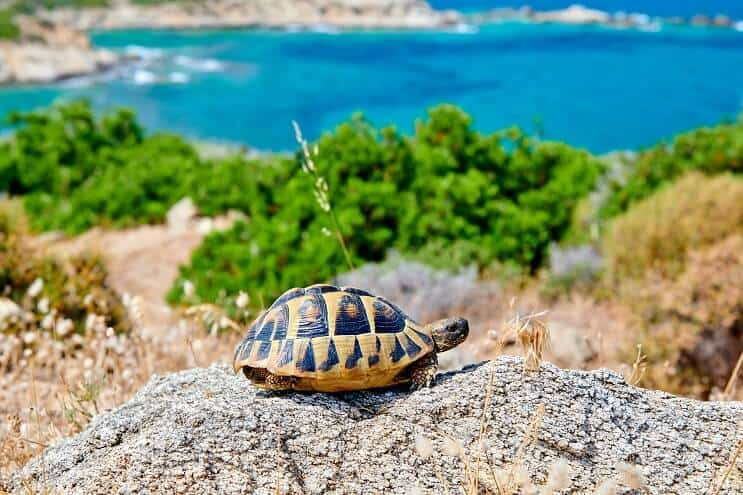 Box Turtle on a Rock