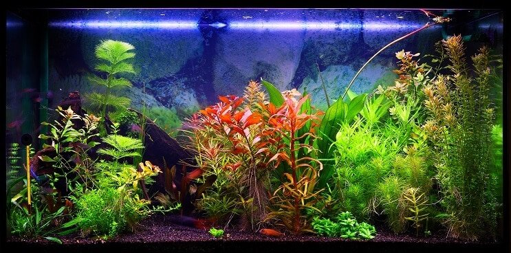 Choosing A 30 Gallon Tank