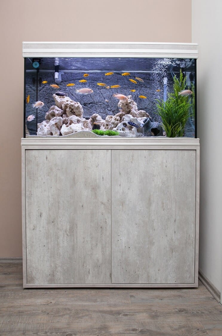 Setting Up A 30 Gallon Tank