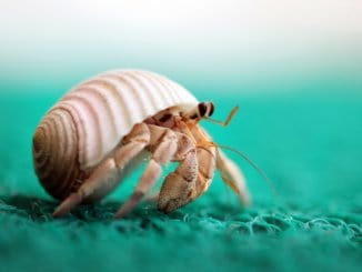 The Ultimate Hermit Crab Care Guide Habitat, Food And Much More… Banner
