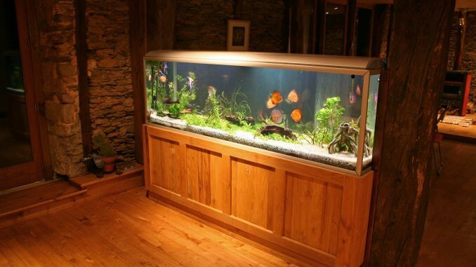 40 Gallon Fish Tank Best Fish, Setup Ideas and More… Banner