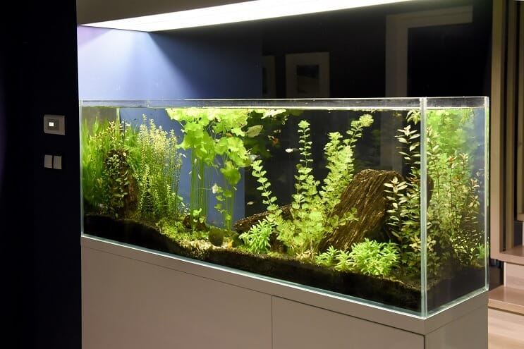 40 Gallon Setup Ideas