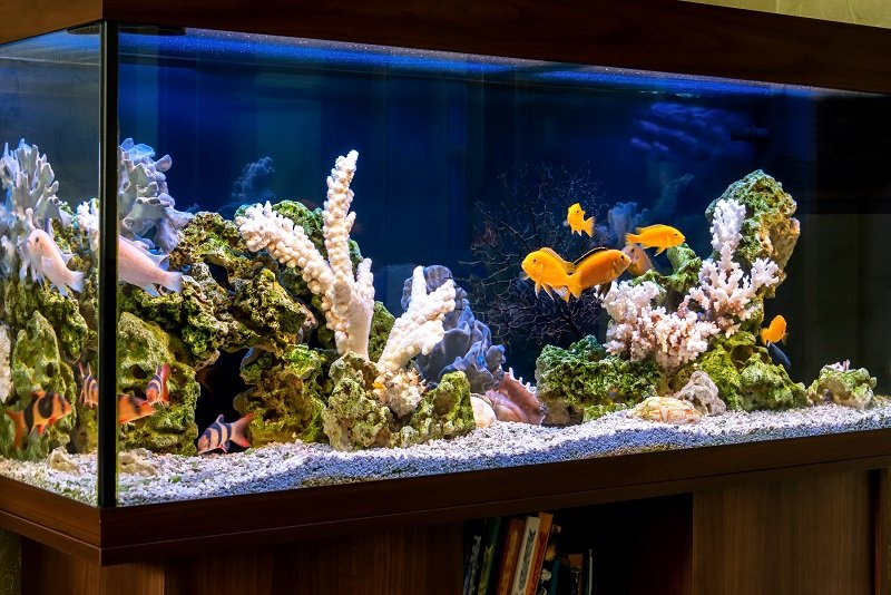 How to prevent a 'New Tank Syndrome