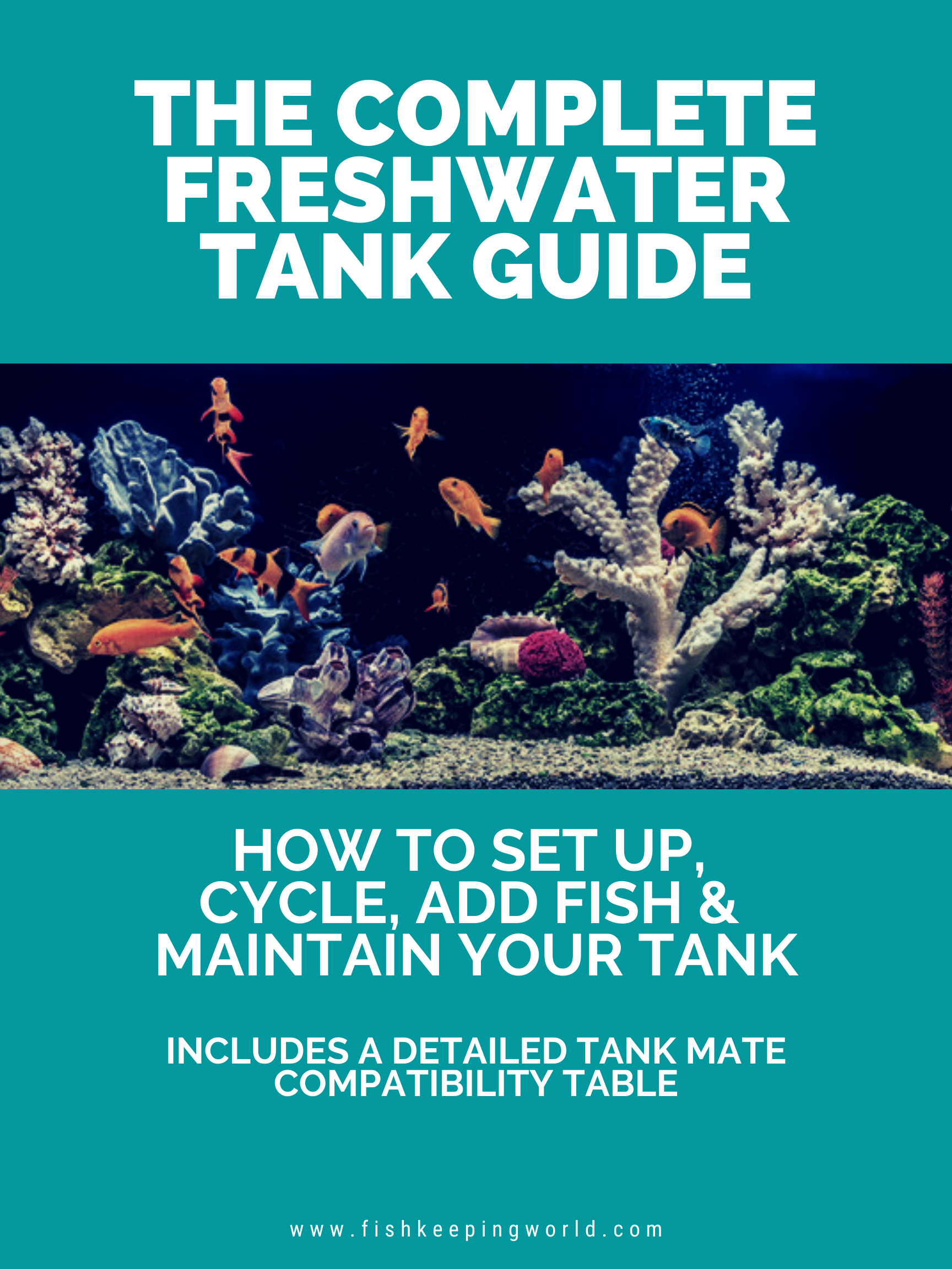 The Complete Freshwater Tank Guide