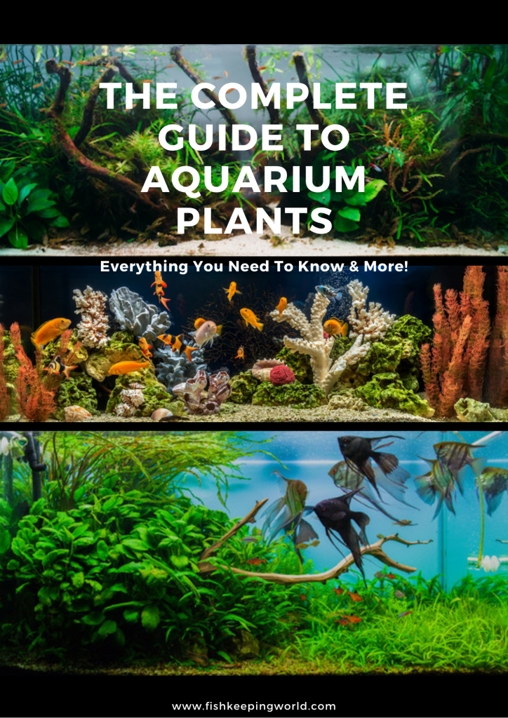 Ultimate Guide to Aquarium Plants