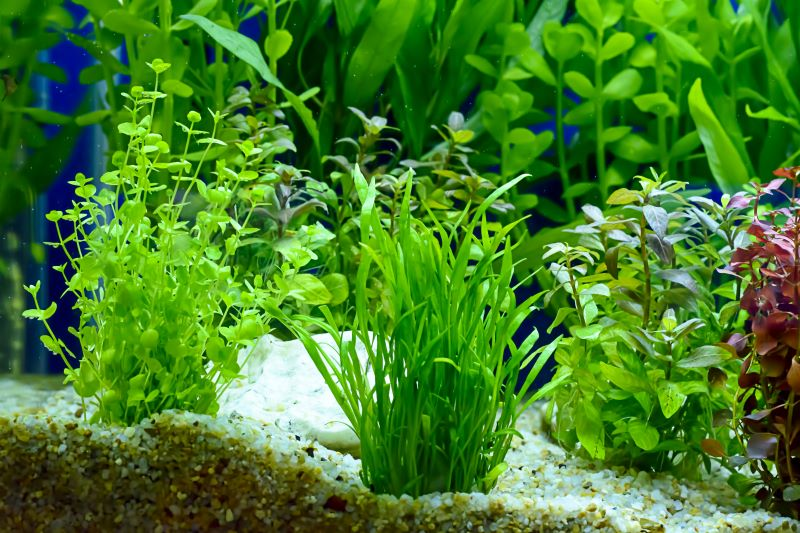Best Plants for Betta Fish