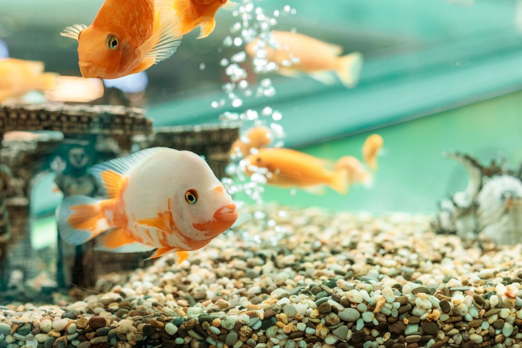 How to Cycle a Fish Tank?