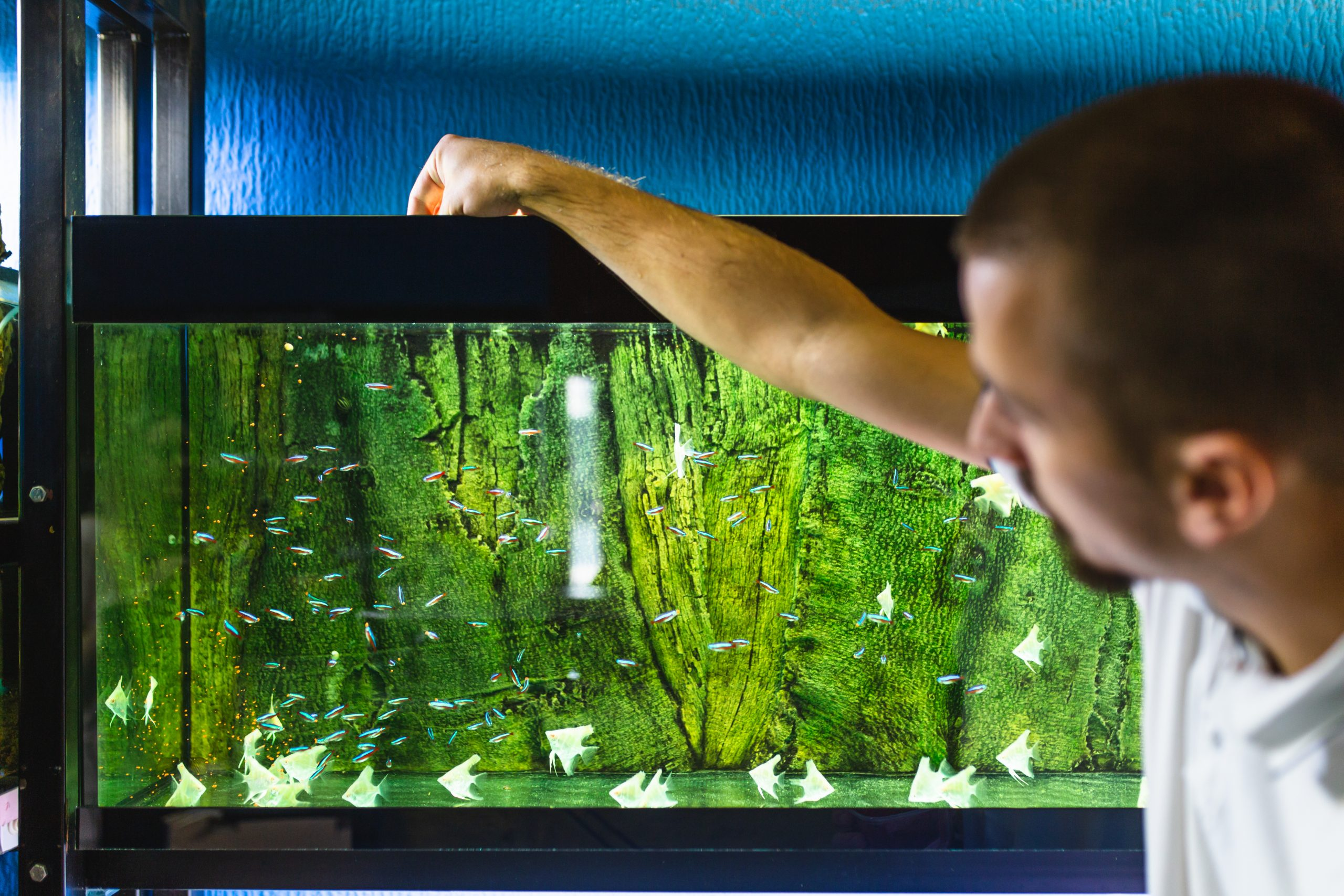 How to Get Rid of Algae in Fish Tank