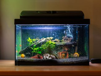 How to Build a Fish Tank