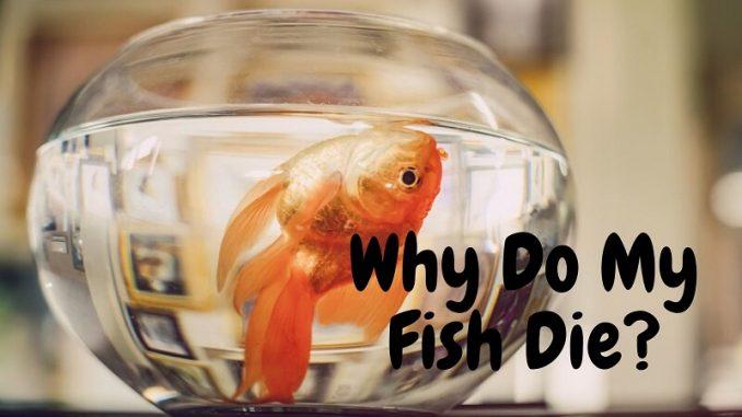 Why Do My Fish Die